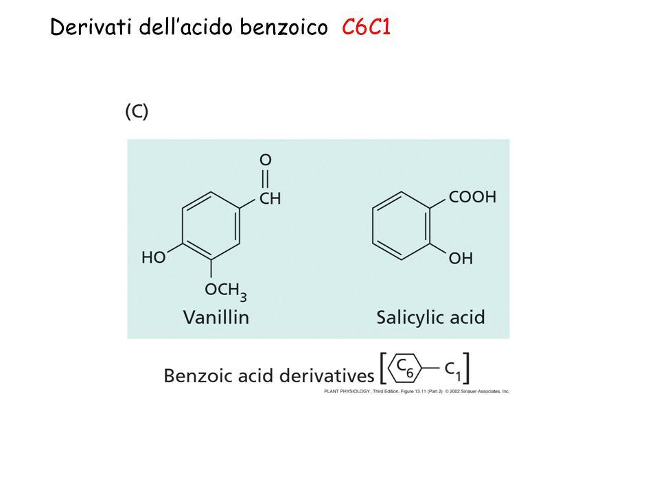 Derivati dell'acido benzoico C6C1