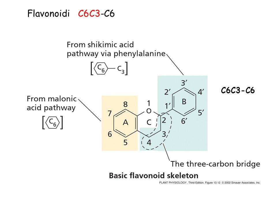 Flavonoidi C6C3-C6 C6C3-C6