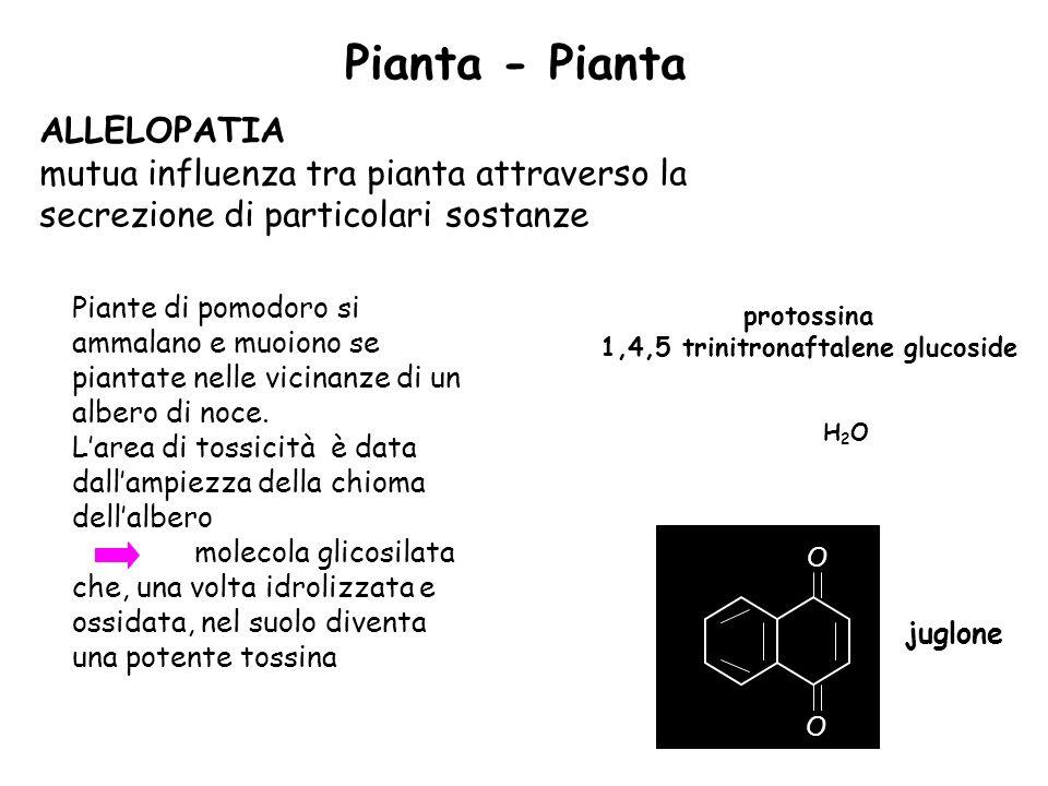1,4,5 trinitronaftalene glucoside