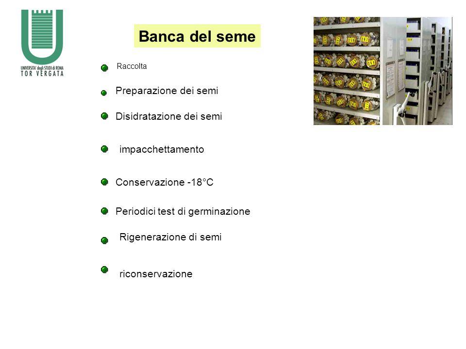 Banca del seme Preparazione dei semi Disidratazione dei semi