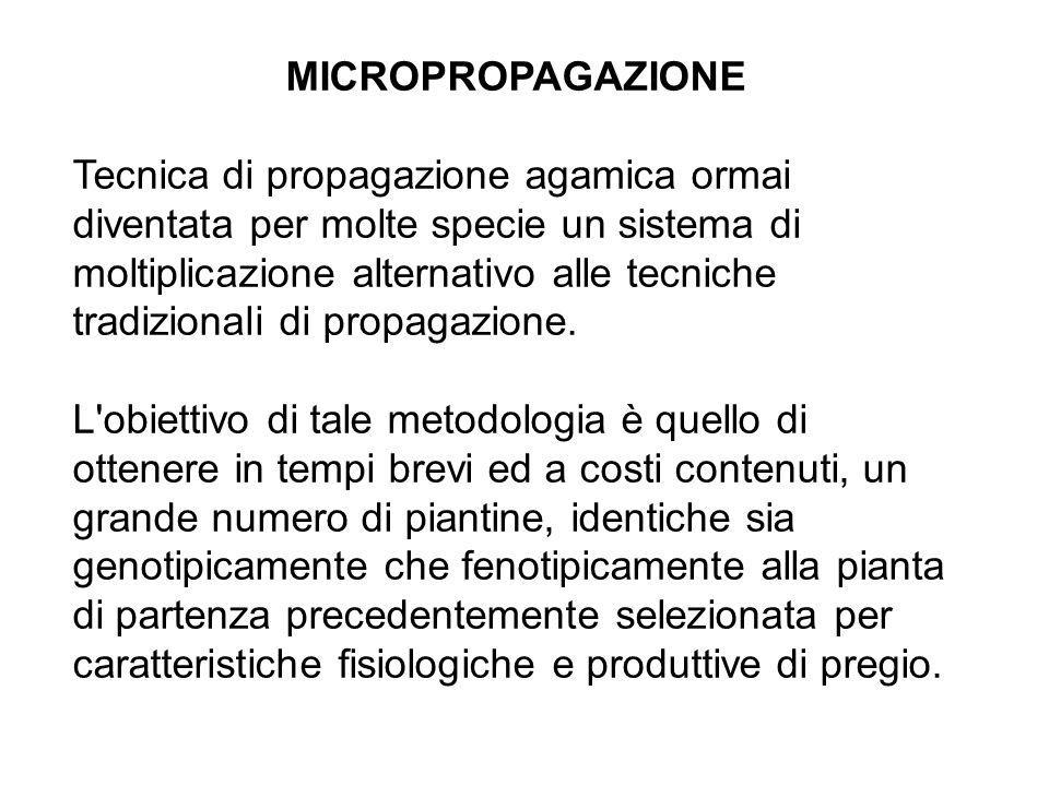 MICROPROPAGAZIONE