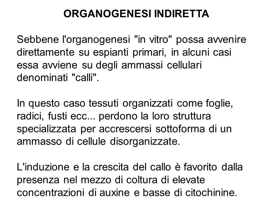 ORGANOGENESI INDIRETTA