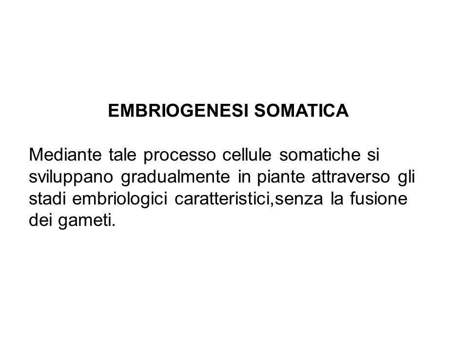 EMBRIOGENESI SOMATICA