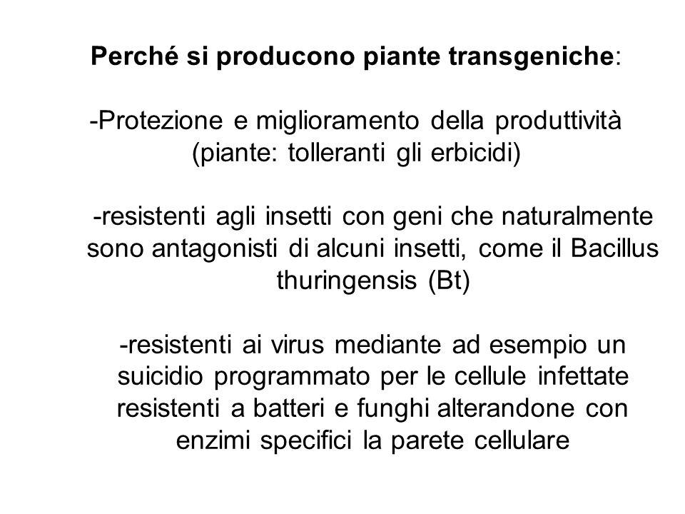 Perché si producono piante transgeniche: