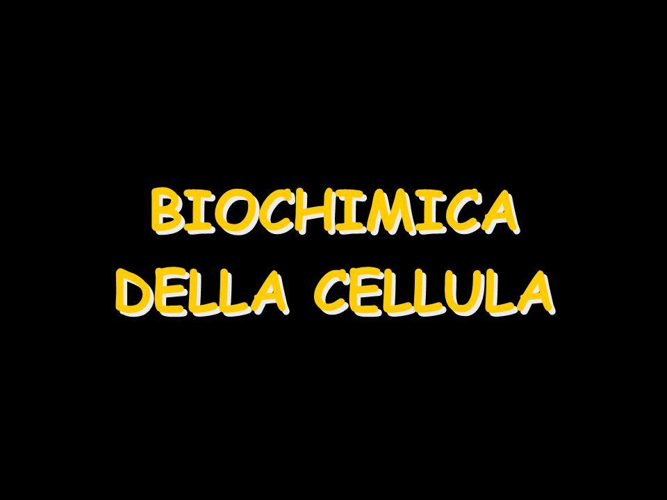 BIOCHIMICA DELLA CELLULA