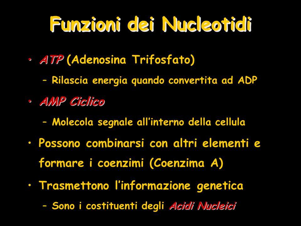 Funzioni dei Nucleotidi