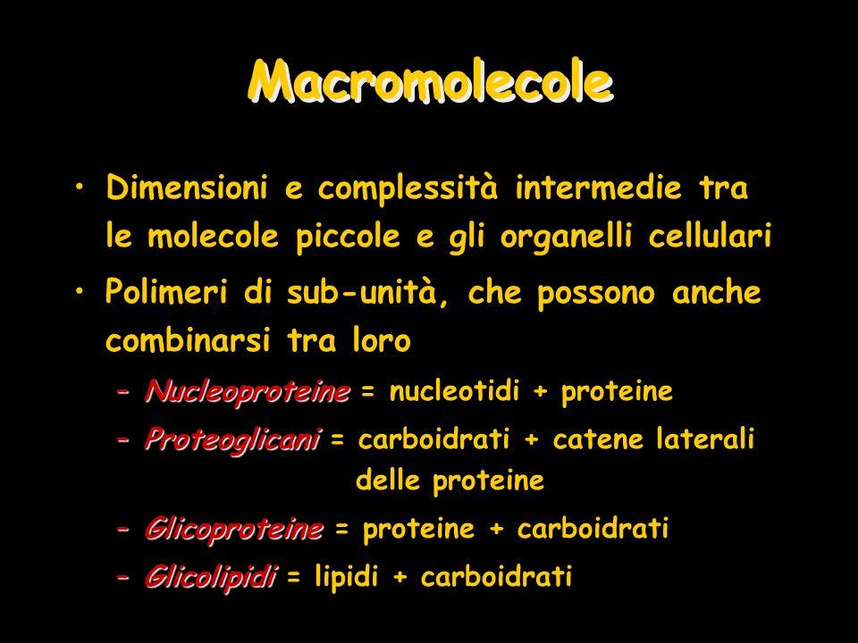 Macromolecole Dimensioni e complessità intermedie tra le molecole piccole e gli organelli cellulari.