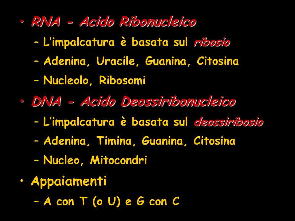 RNA - Acido Ribonucleico