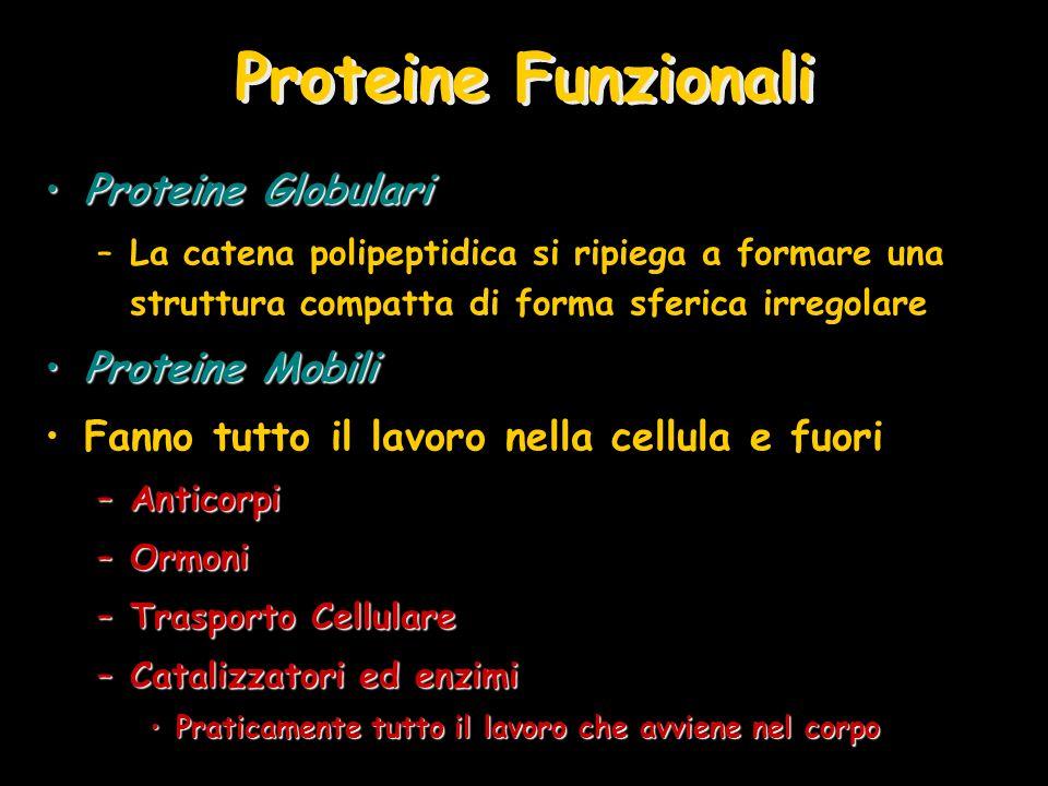 Proteine Funzionali Proteine Globulari Proteine Mobili