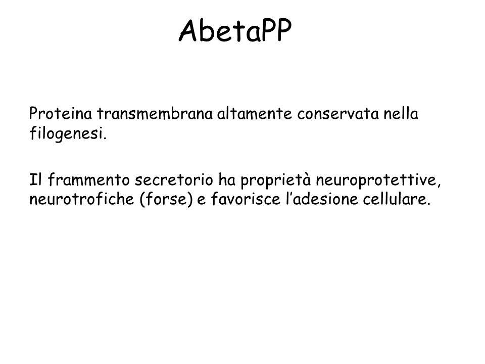 AbetaPP Proteina transmembrana altamente conservata nella filogenesi.