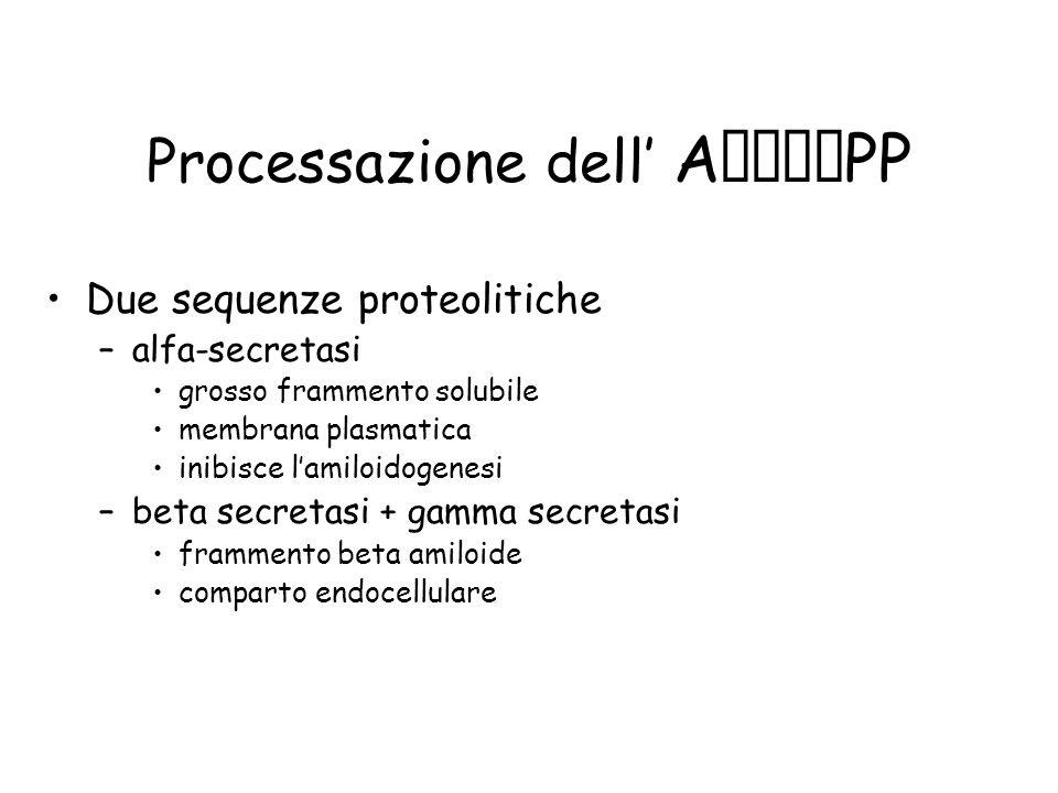Processazione dell' APP