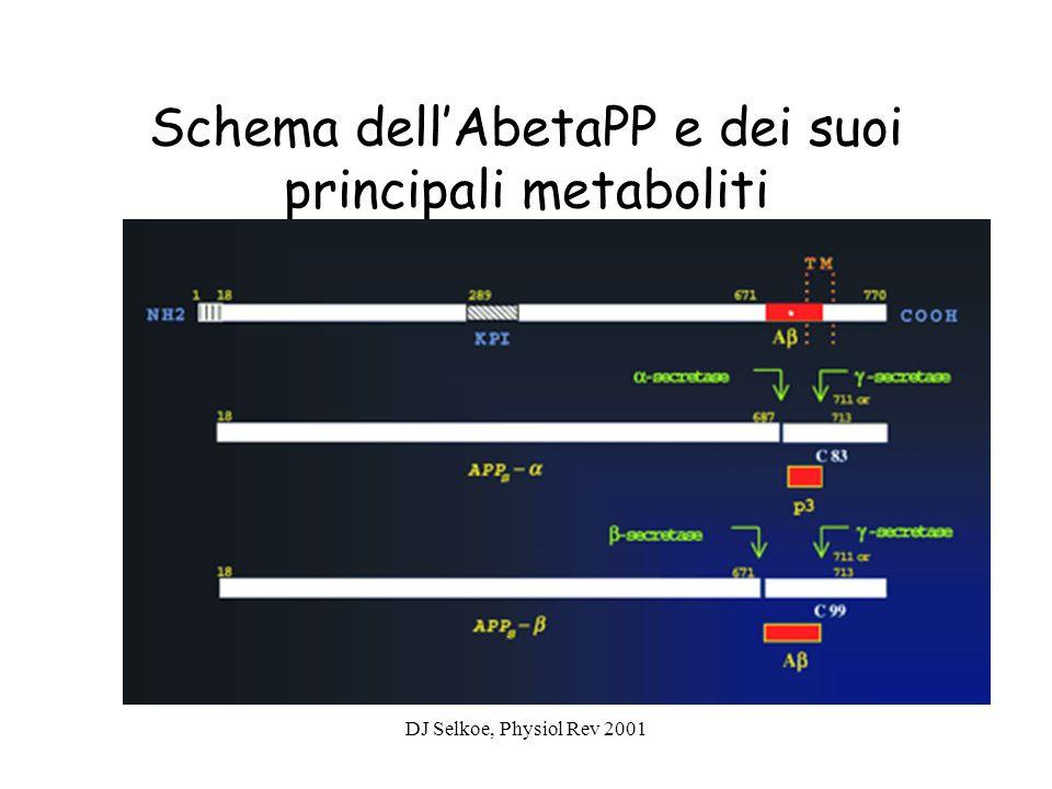 Schema dell'AbetaPP e dei suoi principali metaboliti