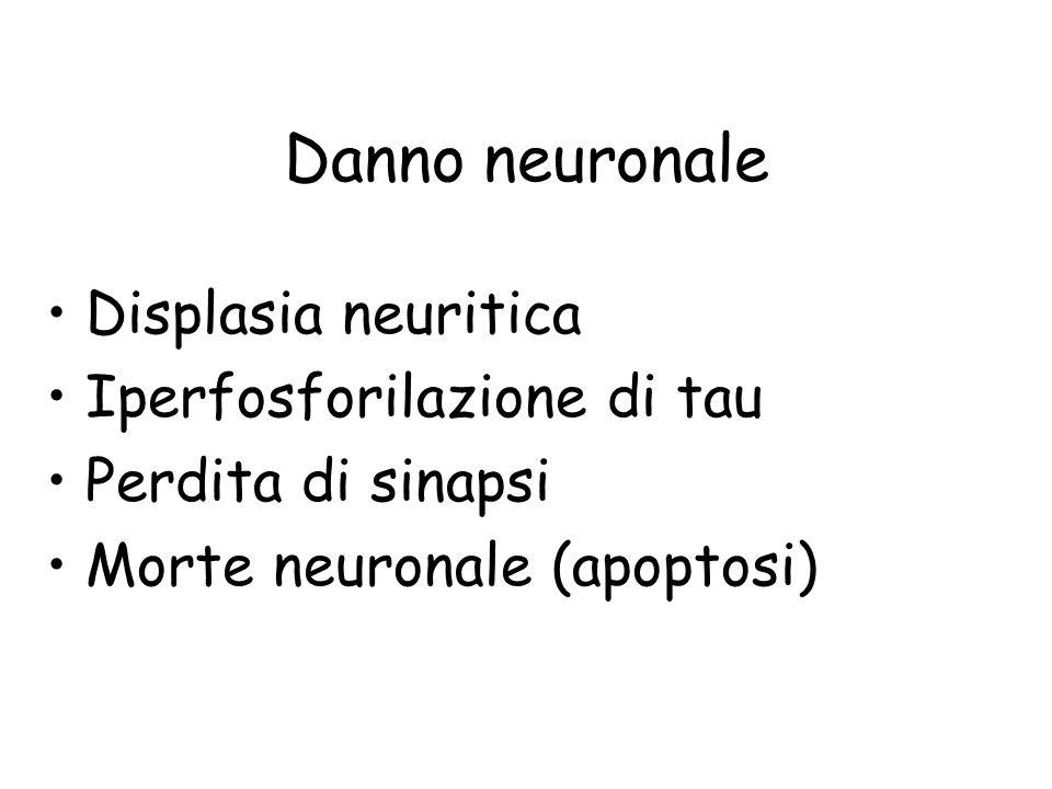 Danno neuronale Displasia neuritica Iperfosforilazione di tau