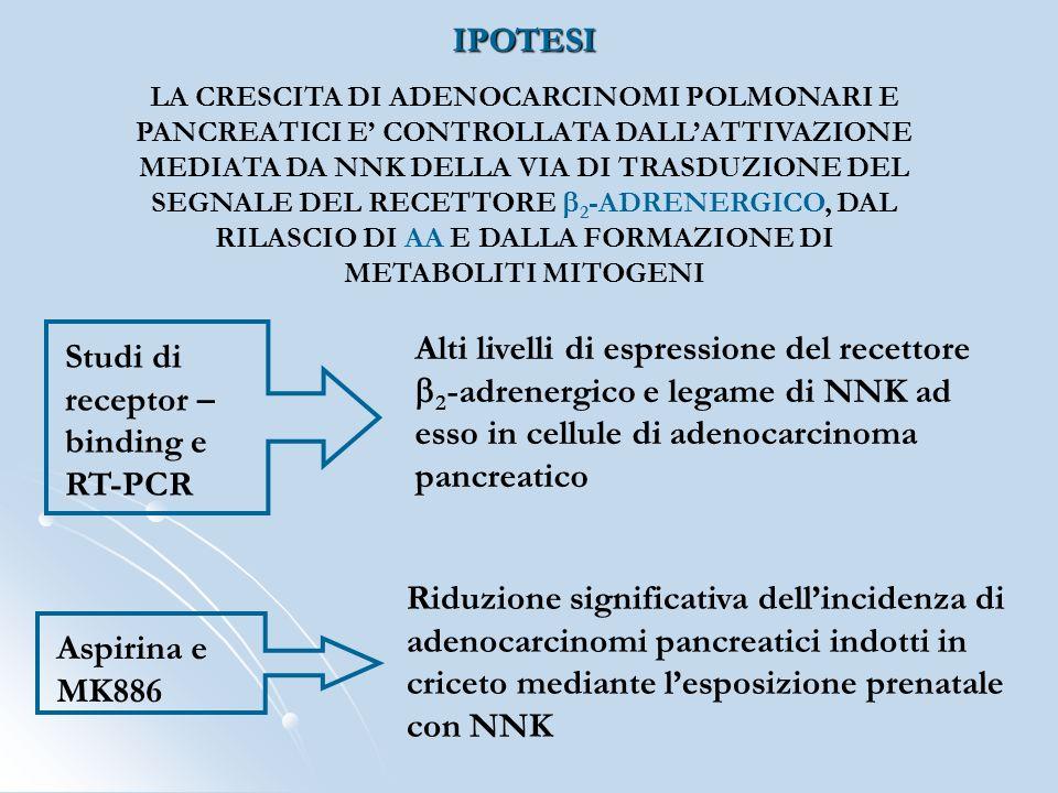 Studi di receptor – binding e RT-PCR