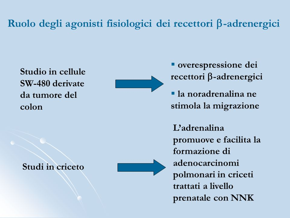Ruolo degli agonisti fisiologici dei recettori b-adrenergici