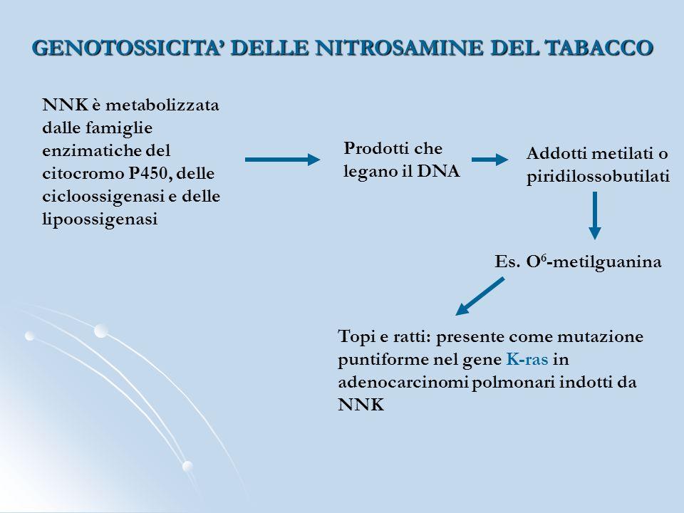 GENOTOSSICITA' DELLE NITROSAMINE DEL TABACCO