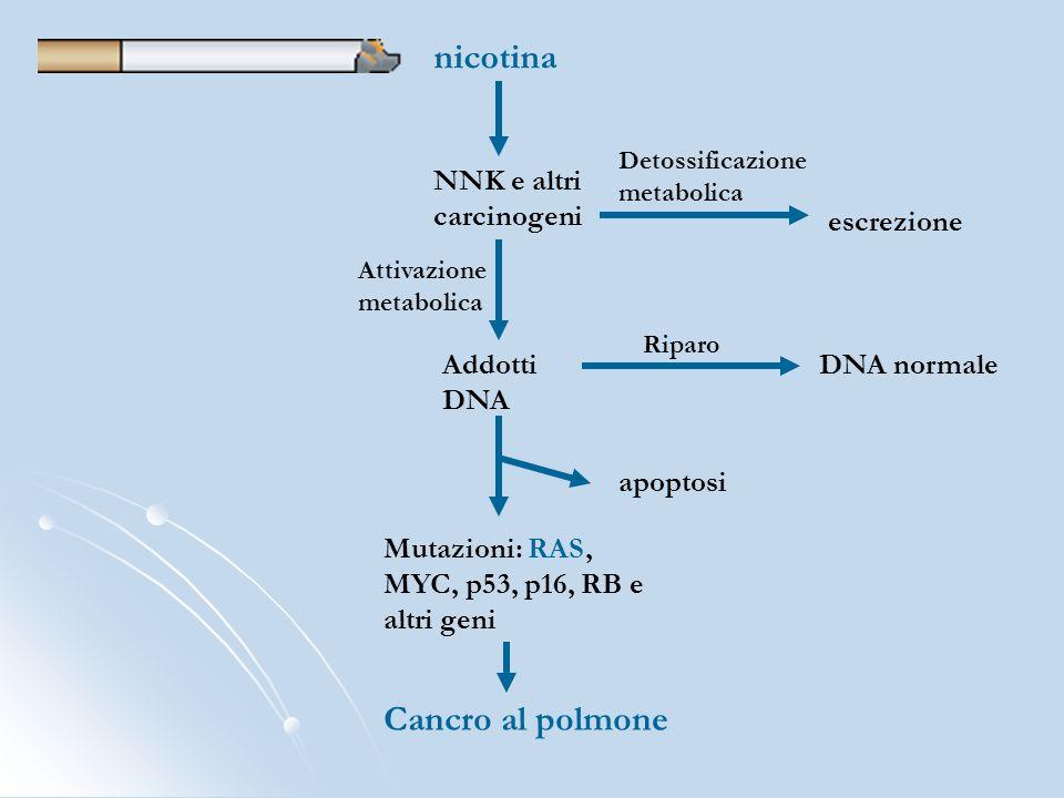 nicotina Cancro al polmone NNK e altri carcinogeni escrezione