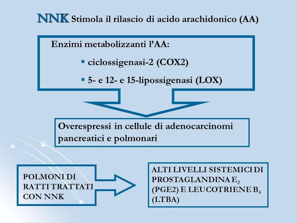 NNK Stimola il rilascio di acido arachidonico (AA)