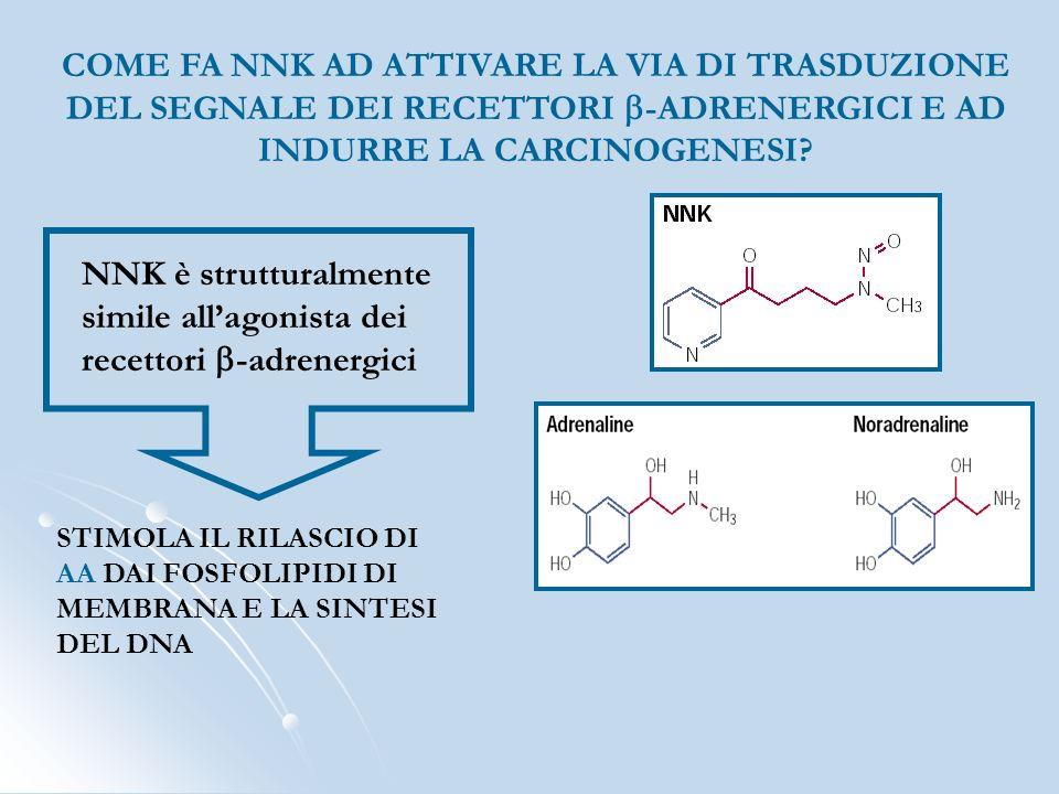 NNK è strutturalmente simile all'agonista dei recettori b-adrenergici