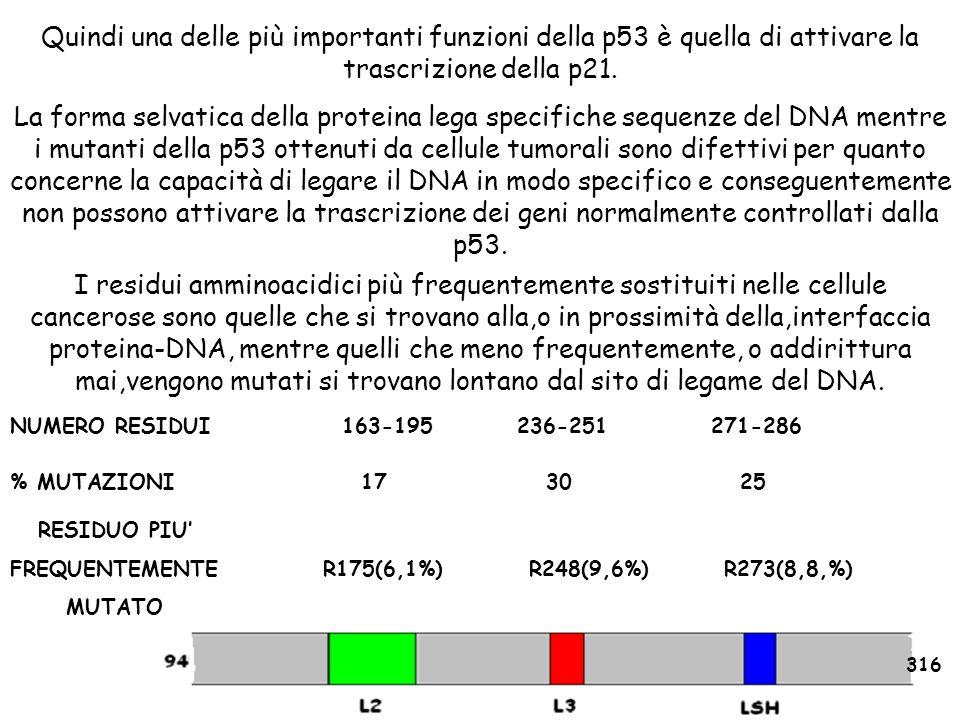 Quindi una delle più importanti funzioni della p53 è quella di attivare la trascrizione della p21.