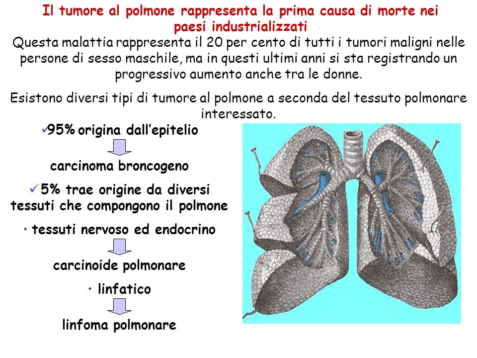 5% trae origine da diversi tessuti che compongono il polmone