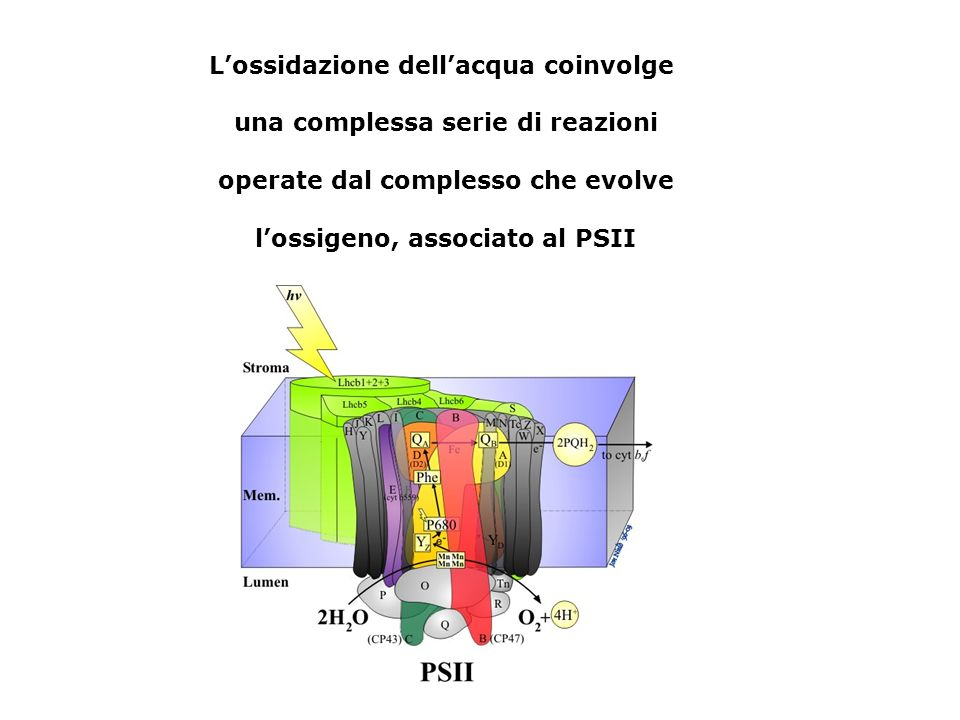 L'ossidazione dell'acqua coinvolge una complessa serie di reazioni