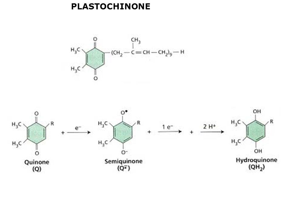 PLASTOCHINONE