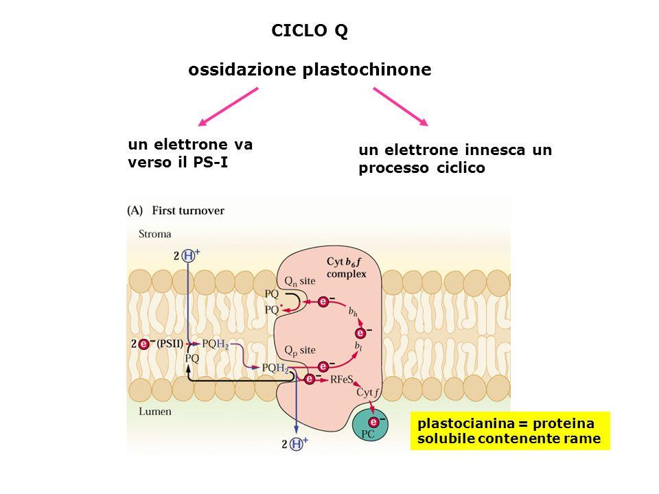 ossidazione plastochinone