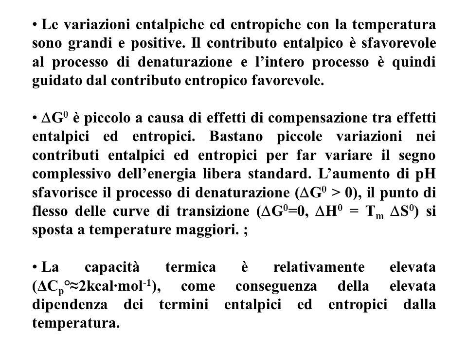 Le variazioni entalpiche ed entropiche con la temperatura sono grandi e positive. Il contributo entalpico è sfavorevole al processo di denaturazione e l'intero processo è quindi guidato dal contributo entropico favorevole.