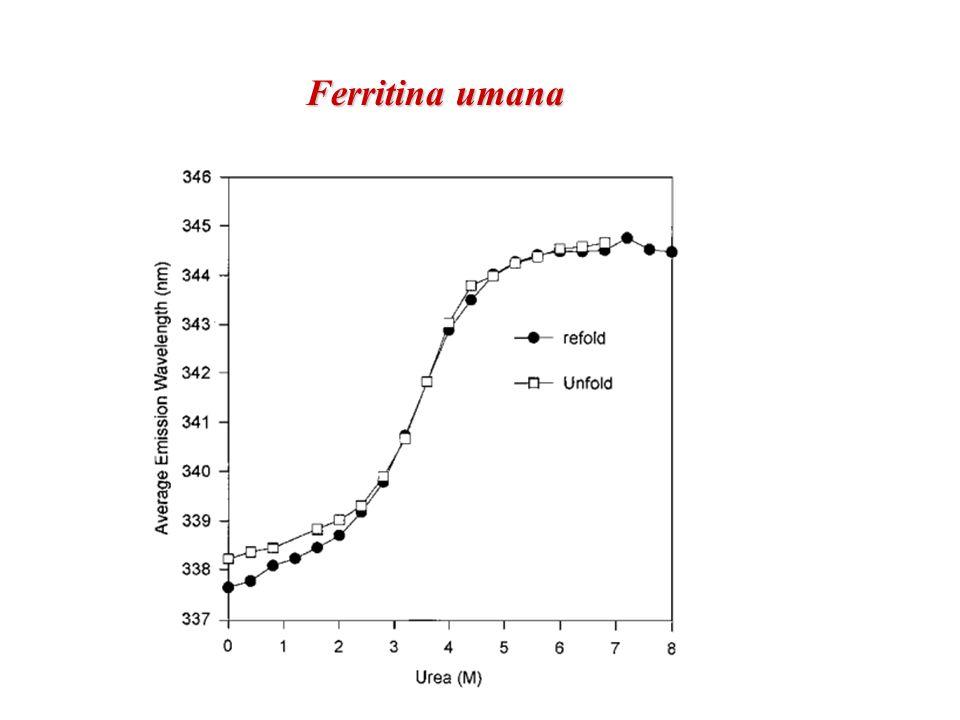 Ferritina umana