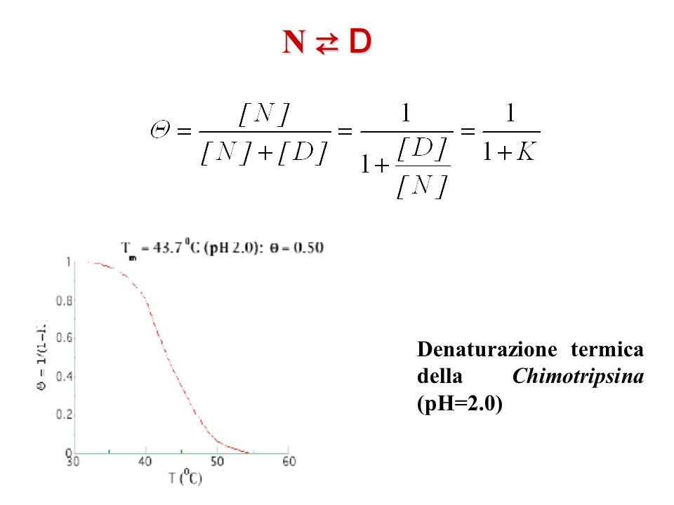 N ⇄ D Denaturazione termica della Chimotripsina (pH=2.0)