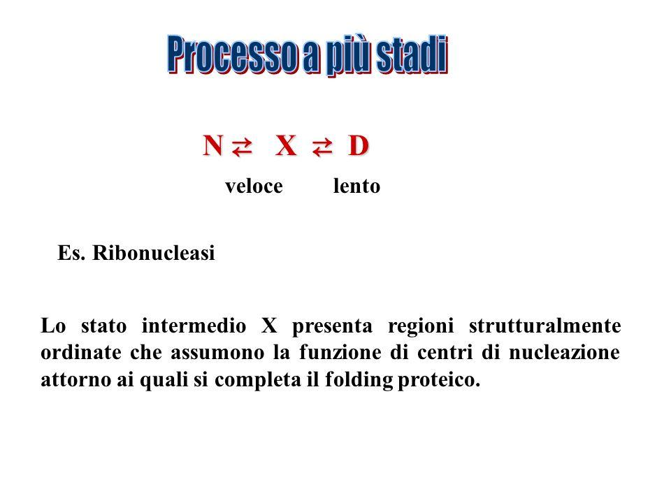 Processo a più stadi N ⇄ X ⇄ D veloce lento Es. Ribonucleasi