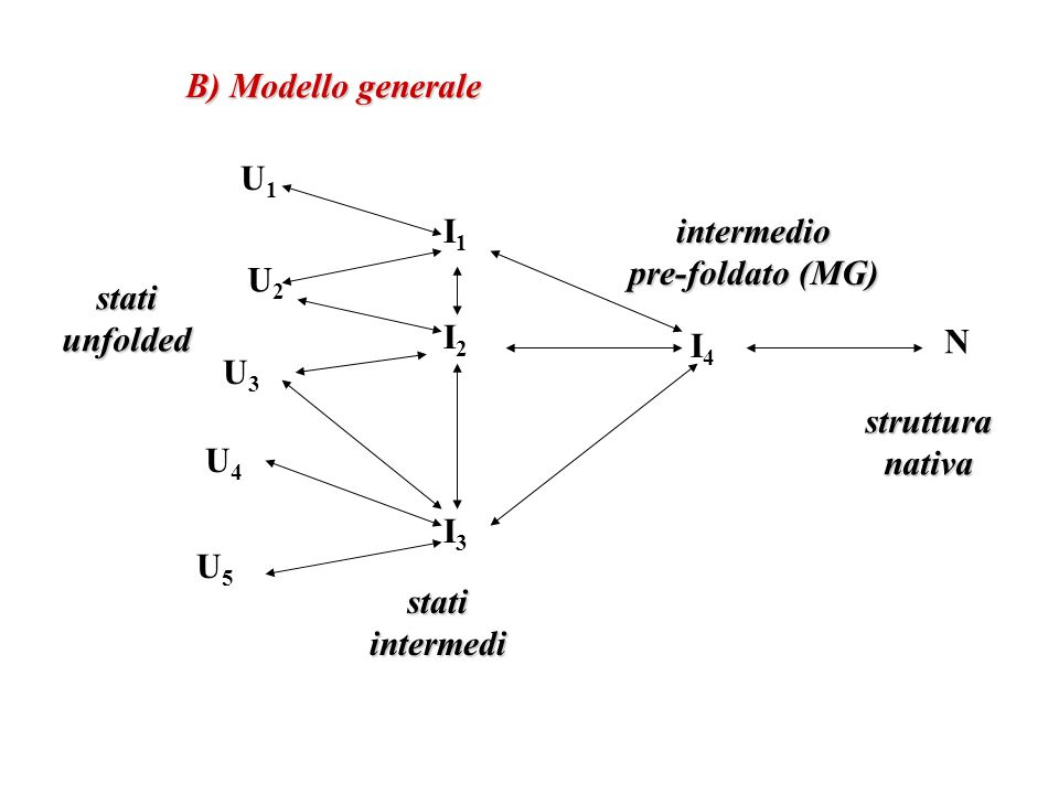 B) Modello generale U1. I1. intermedio. pre-foldato (MG) U2. stati. unfolded. I2. I4. N. U3.