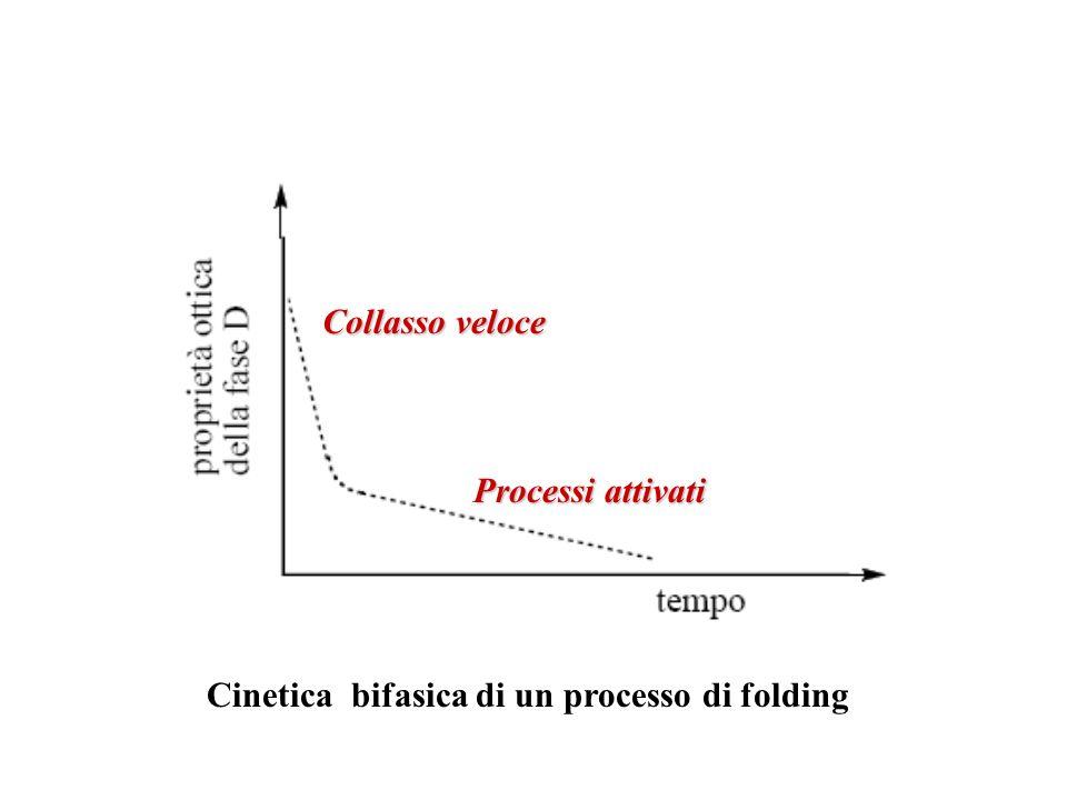 Collasso veloce Processi attivati Cinetica bifasica di un processo di folding