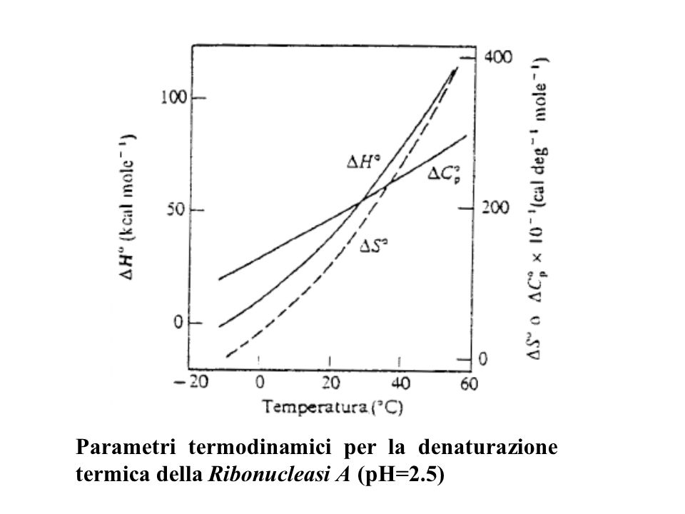 Parametri termodinamici per la denaturazione termica della Ribonucleasi A (pH=2.5)