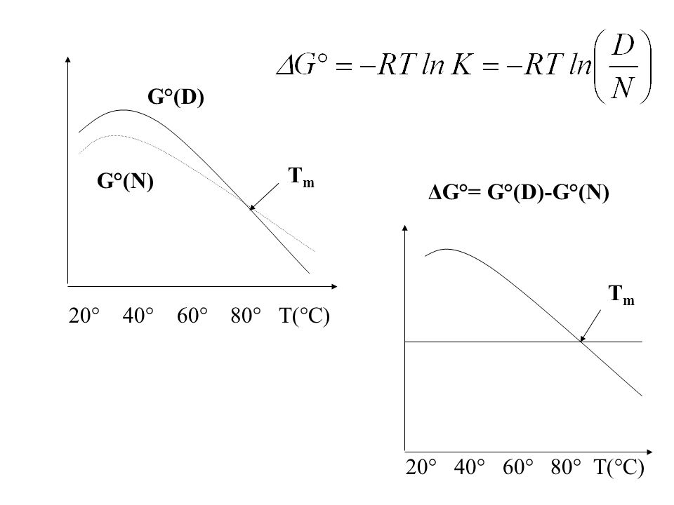 G°(D) Tm G°(N) ΔG°= G°(D)-G°(N) Tm 20° 40° 60° 80° T(°C) 20° 40° 60° 80° T(°C)