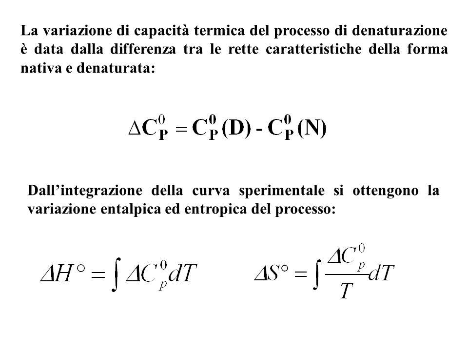 La variazione di capacità termica del processo di denaturazione è data dalla differenza tra le rette caratteristiche della forma nativa e denaturata:
