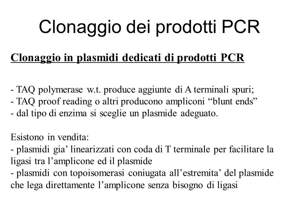 Clonaggio dei prodotti PCR