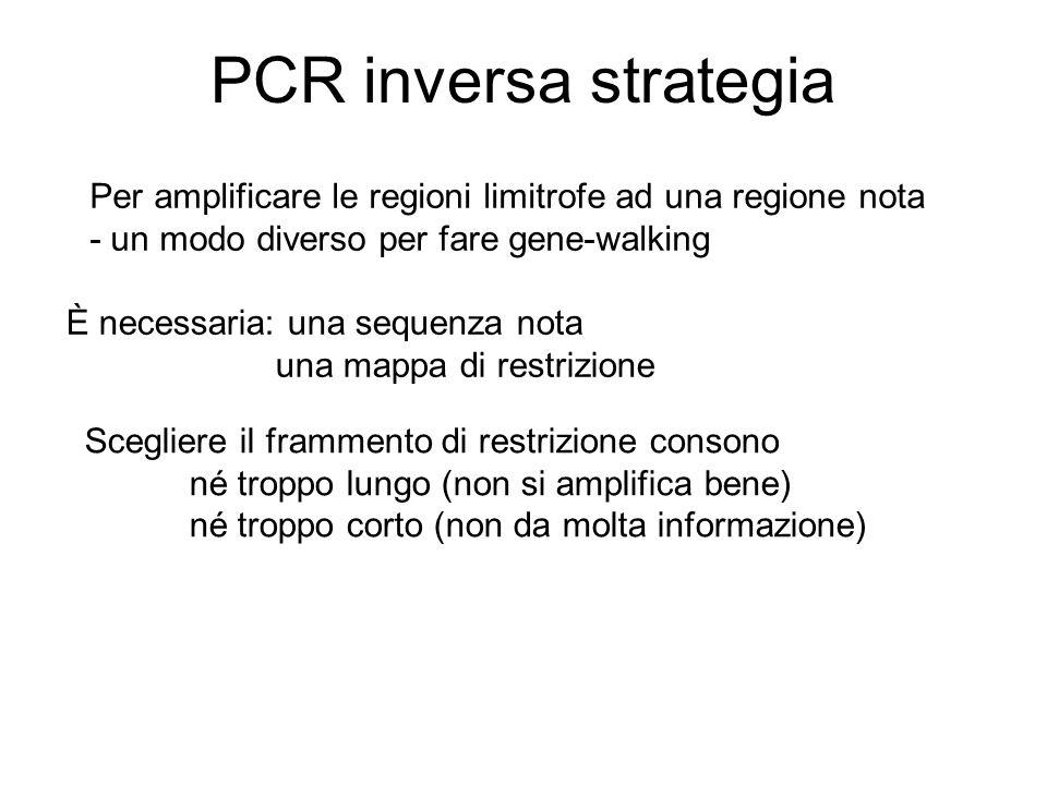 PCR inversa strategia Per amplificare le regioni limitrofe ad una regione nota. - un modo diverso per fare gene-walking.