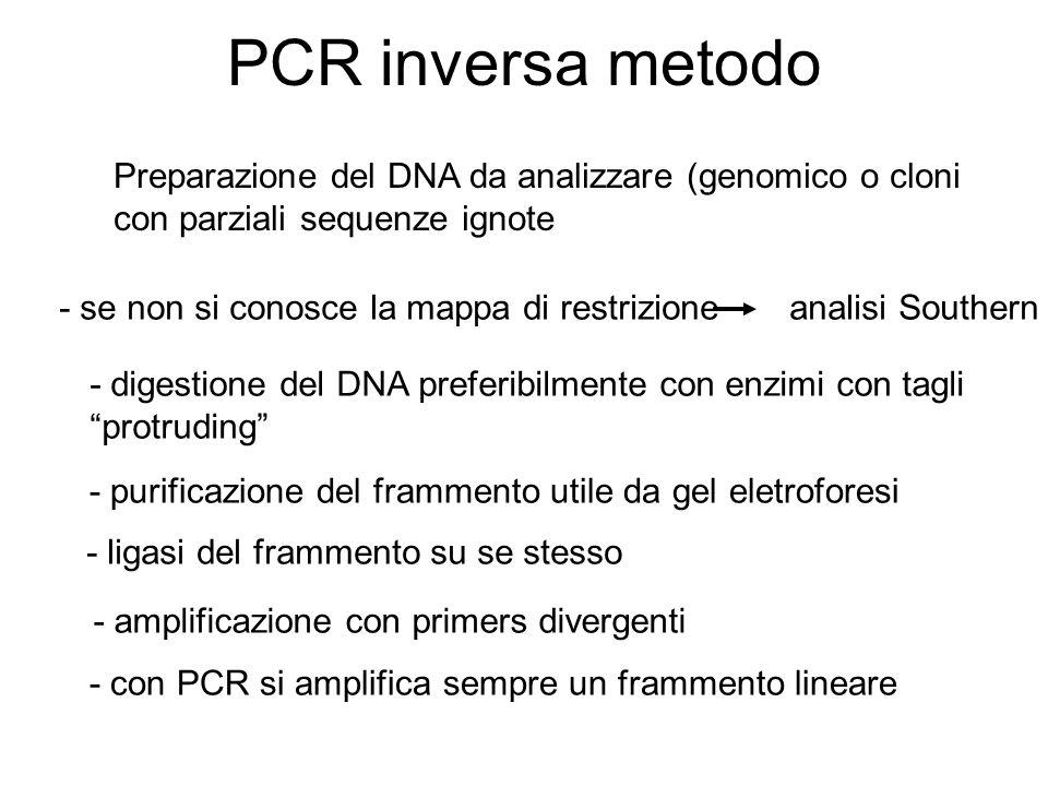 PCR inversa metodo Preparazione del DNA da analizzare (genomico o cloni con parziali sequenze ignote.