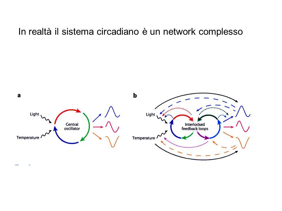 In realtà il sistema circadiano è un network complesso