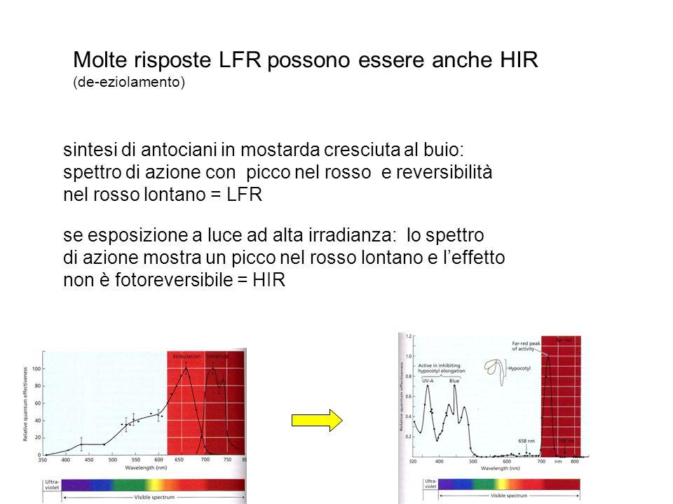 Molte risposte LFR possono essere anche HIR
