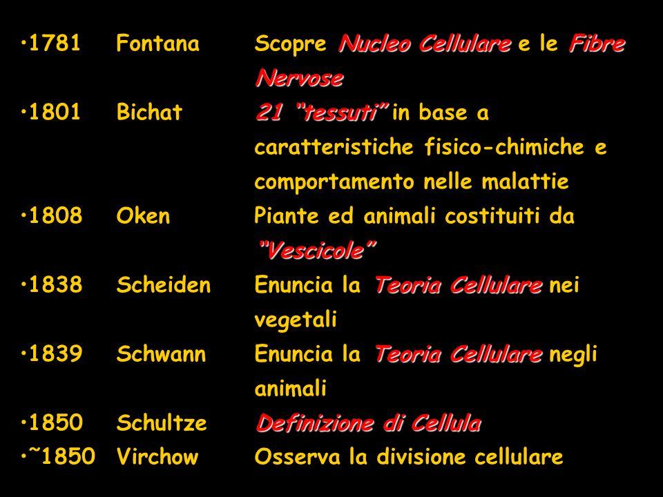 1781 Fontana Scopre Nucleo Cellulare e le Fibre Nervose