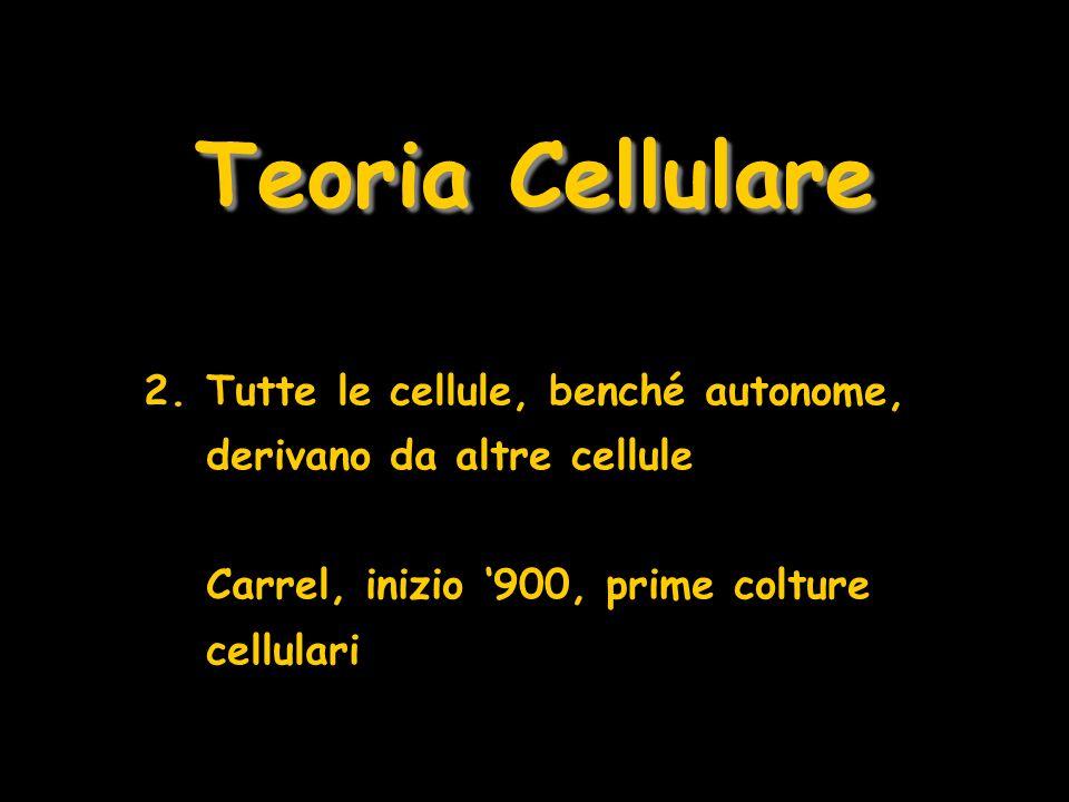 Teoria Cellulare Tutte le cellule, benché autonome, derivano da altre cellule.