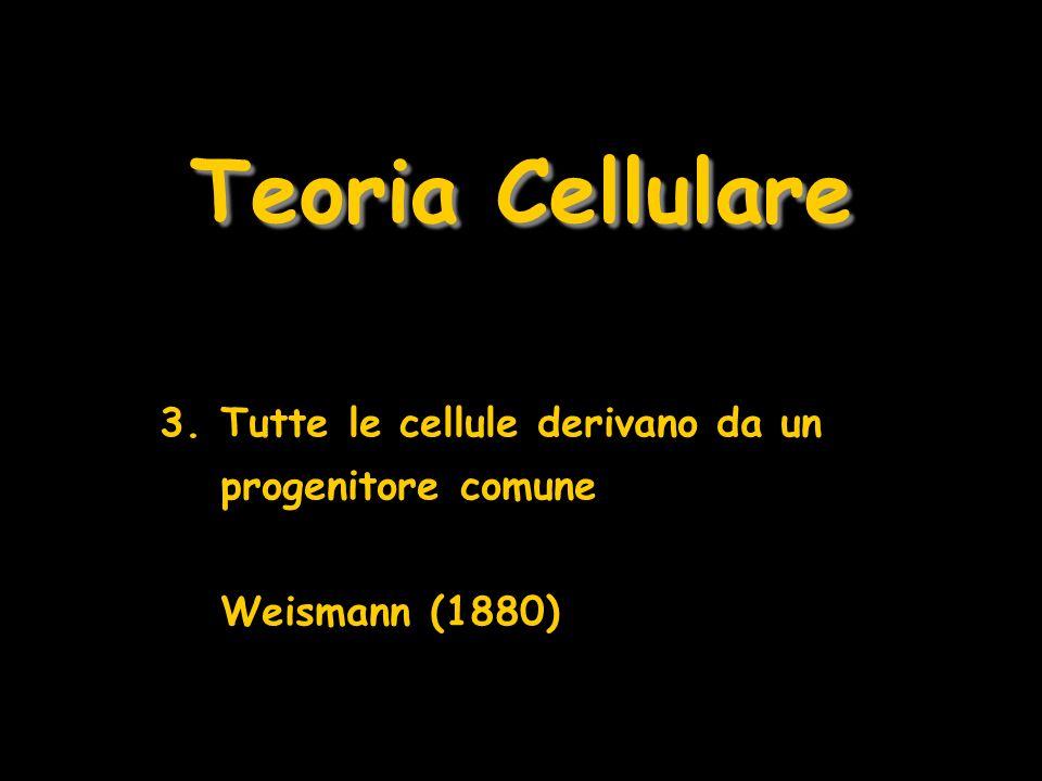 Teoria Cellulare Tutte le cellule derivano da un progenitore comune