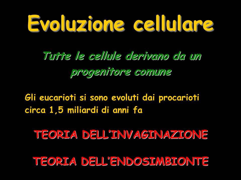 Evoluzione cellulare Tutte le cellule derivano da un progenitore comune. Gli eucarioti si sono evoluti dai procarioti circa 1,5 miliardi di anni fa.
