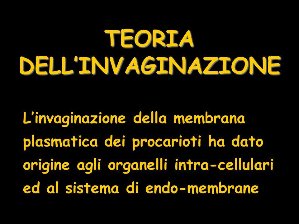 TEORIA DELL'INVAGINAZIONE