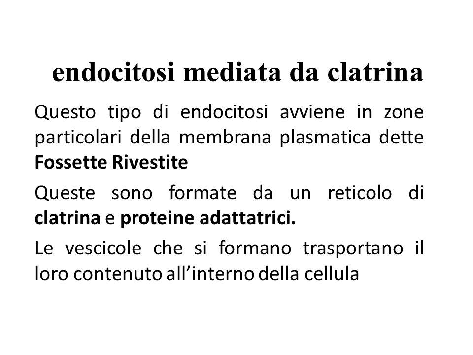 endocitosi mediata da clatrina