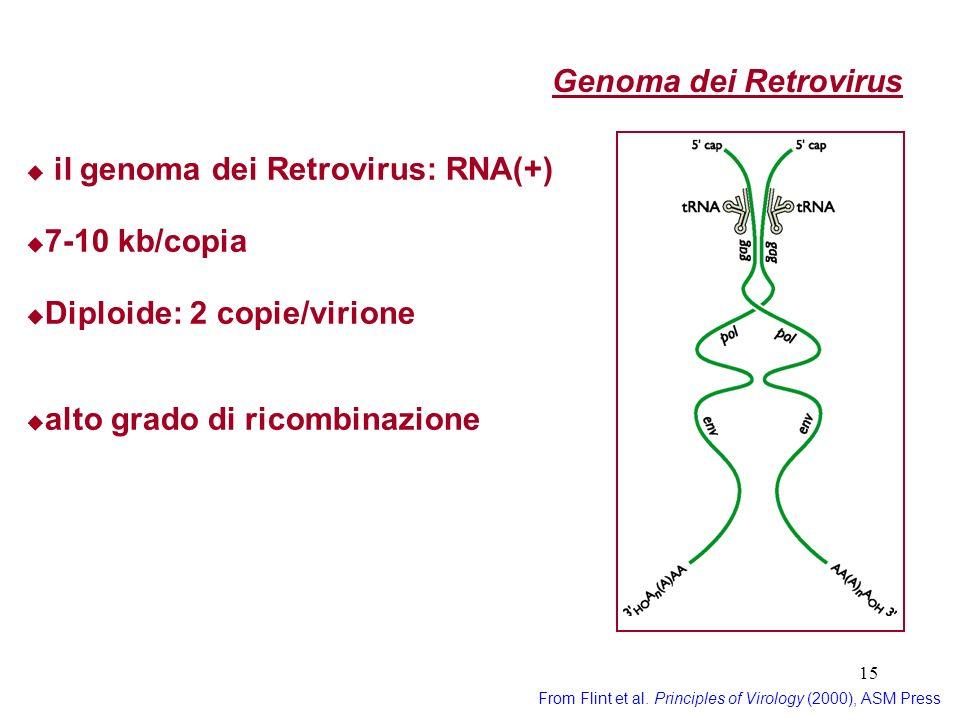 il genoma dei Retrovirus: RNA(+)
