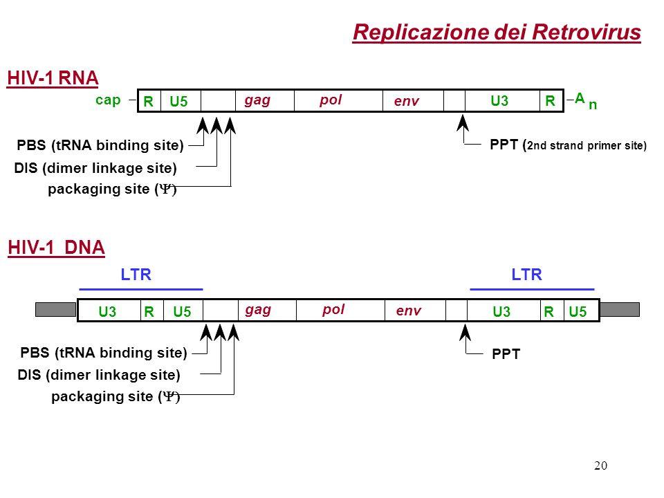 Replicazione dei Retrovirus